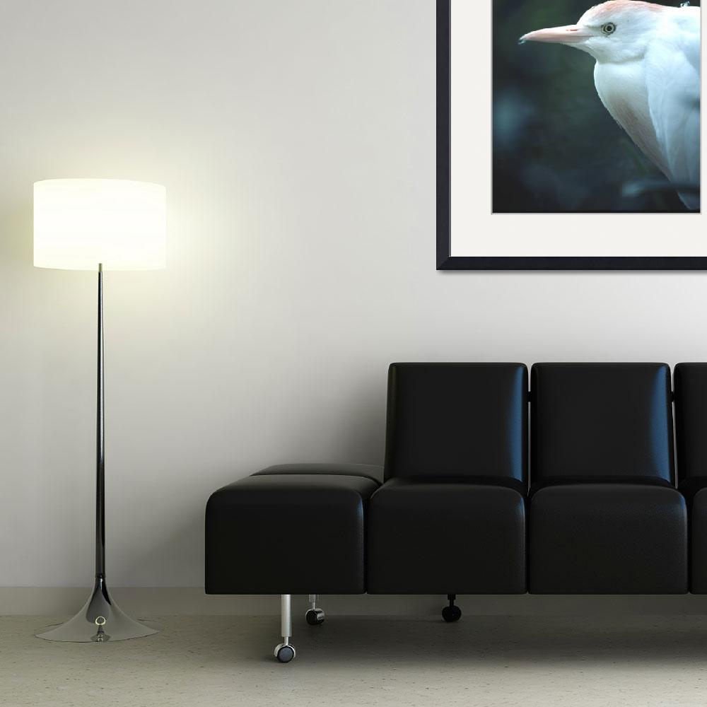 """""""Cattle Egret Head&quot  (2008) by buffaloworks"""