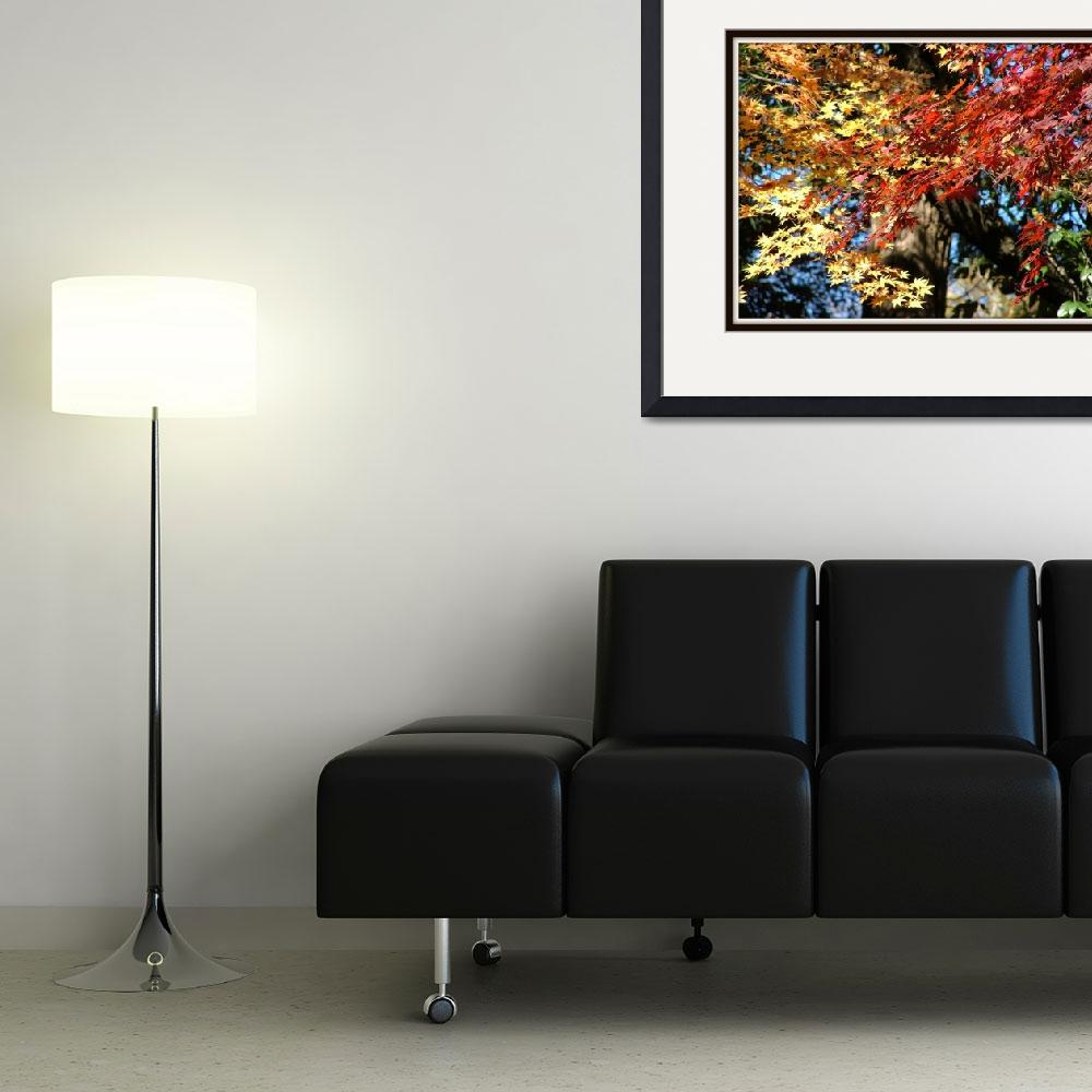 """""""Autumn colours""""  (2007) by DinyarG"""
