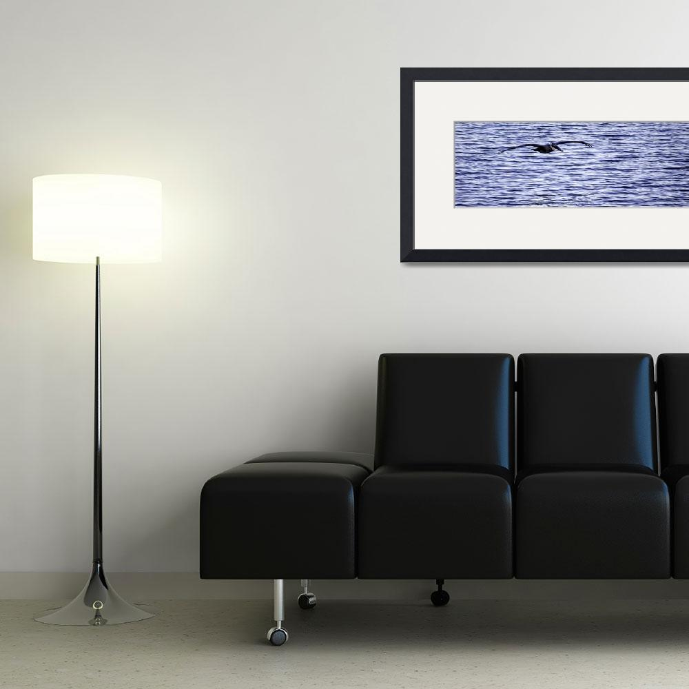 """Pelican Pano""  (2012) by LauraD"