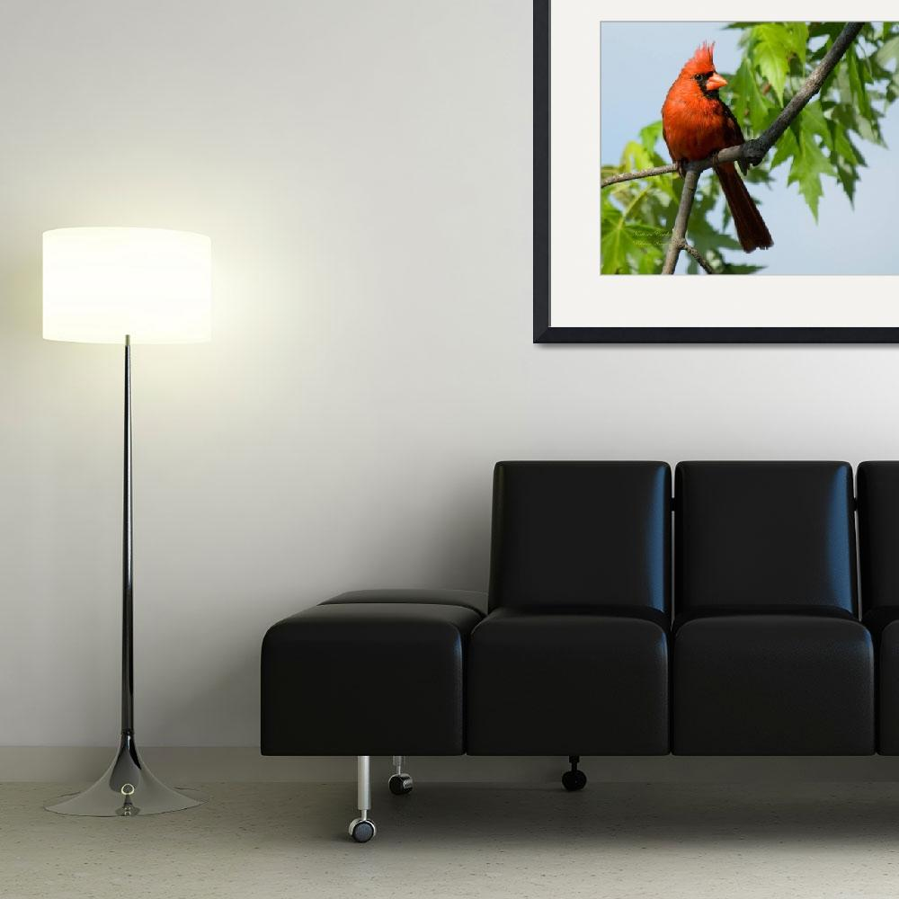 """""""A Cardinal Delight&quot  by tricia"""