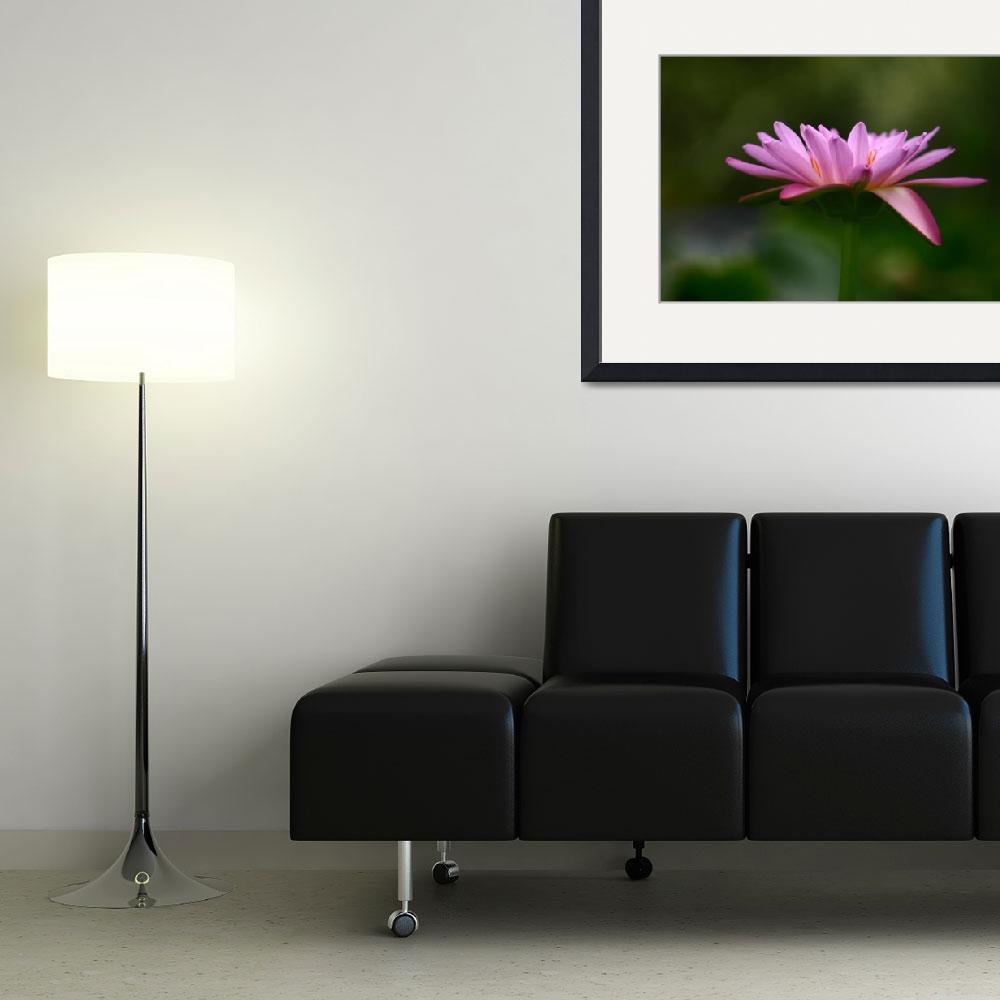 """""""Water Lily Abstract&quot  (2004) by mrosley"""