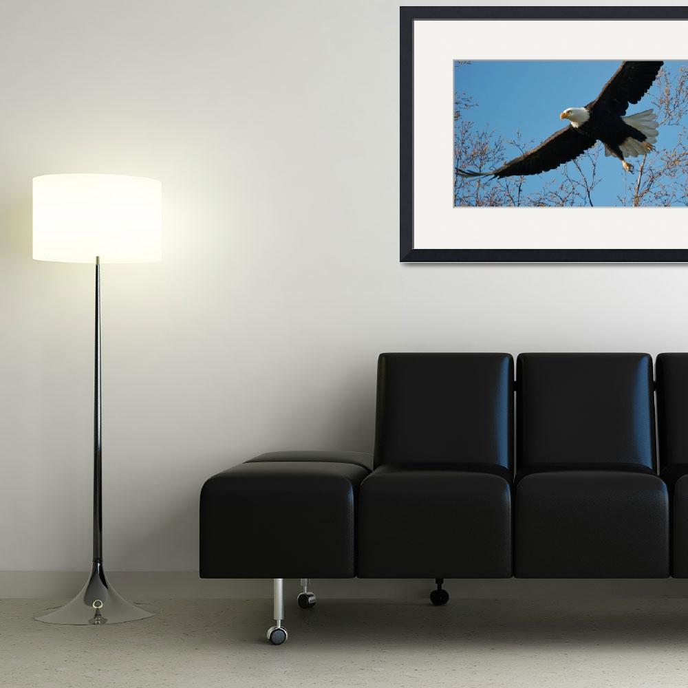 """Eagle in Flight""  (2011) by CaptureLife"