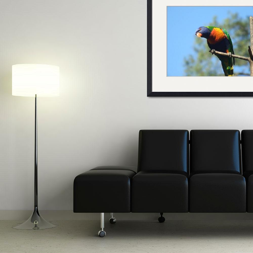 """""""Turquoise Parrot&quot  by majkl20"""