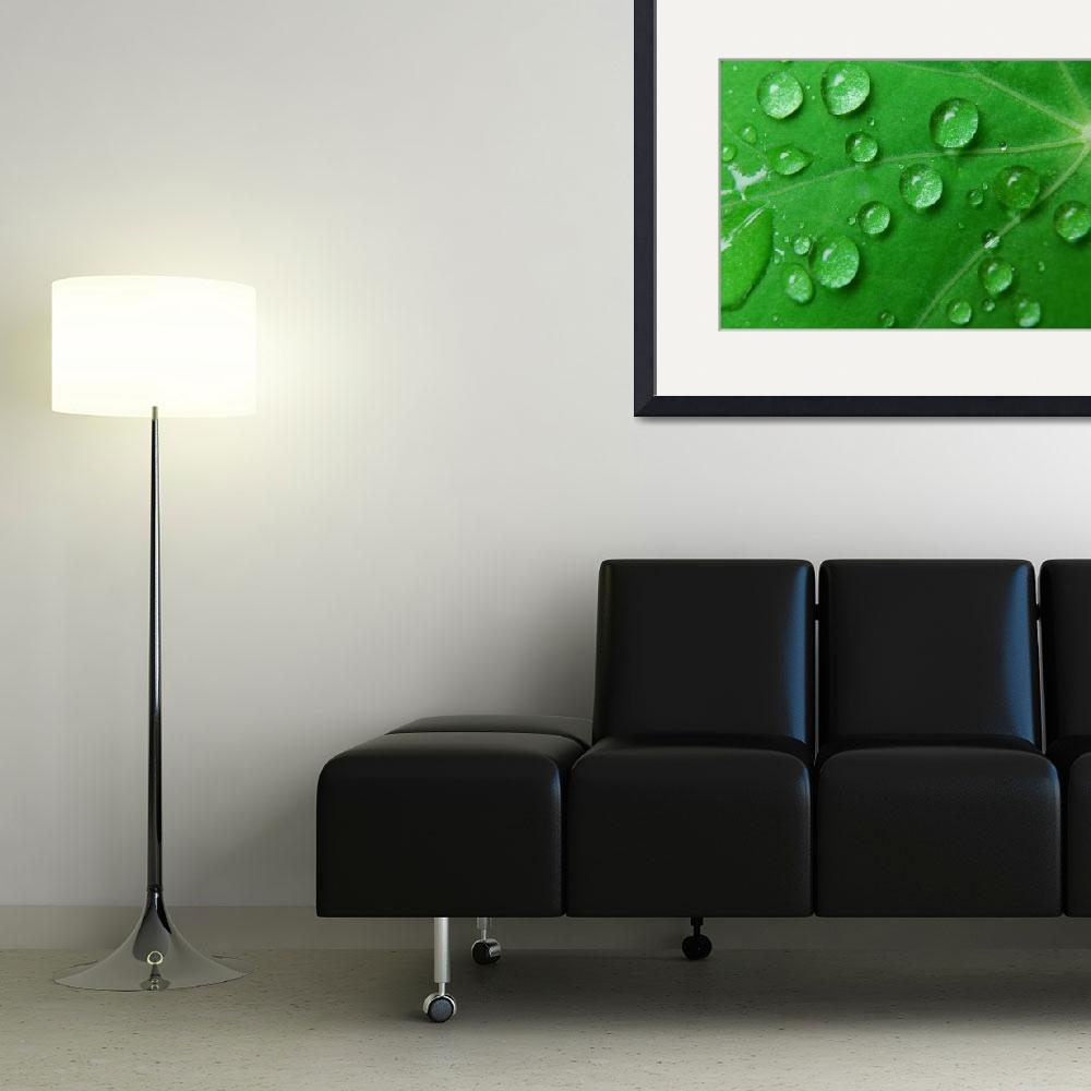 """""""Water Drops Rain Green Leaf, Ucluelet, Vancouver I&quot  by toddbush"""