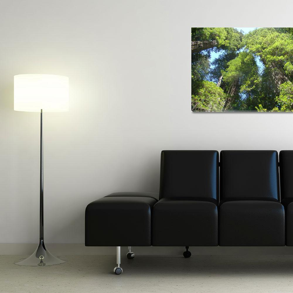 """""""Redwood Trees Forest Fine Art Prints&quot  (2011) by BasleeTroutman"""