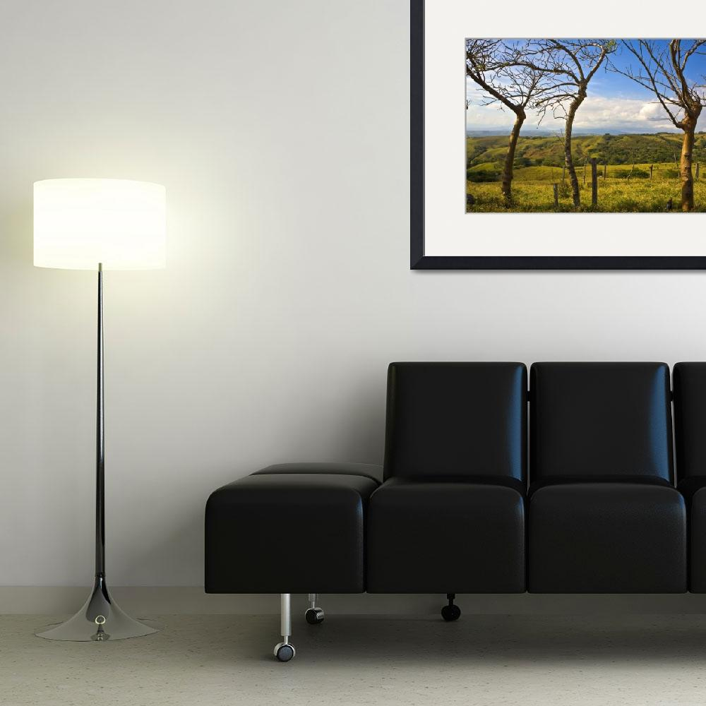 """""""Three Leafless Trees, Costa Rica&quot  (2008) by madeline"""