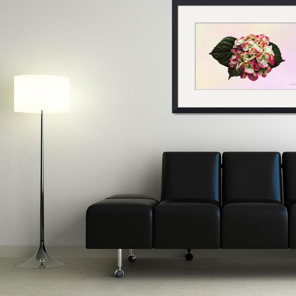 """""""One Pink and White Hydrangea&quot  by susansartgallery"""