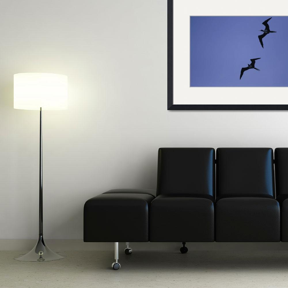 """""""Frigate Birds&quot  (2008) by johnpetraborg"""