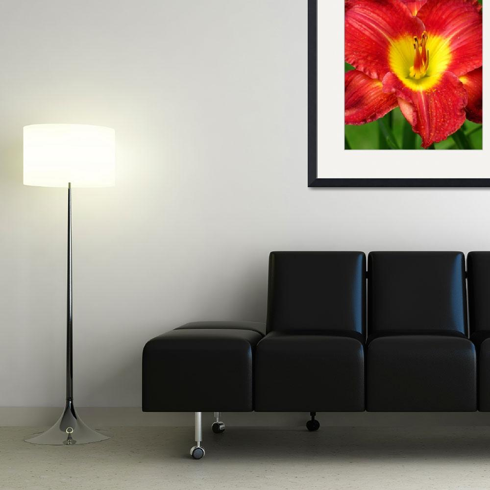 """""""Red & Yellow Daylily""""  (2009) by mariehedtke"""