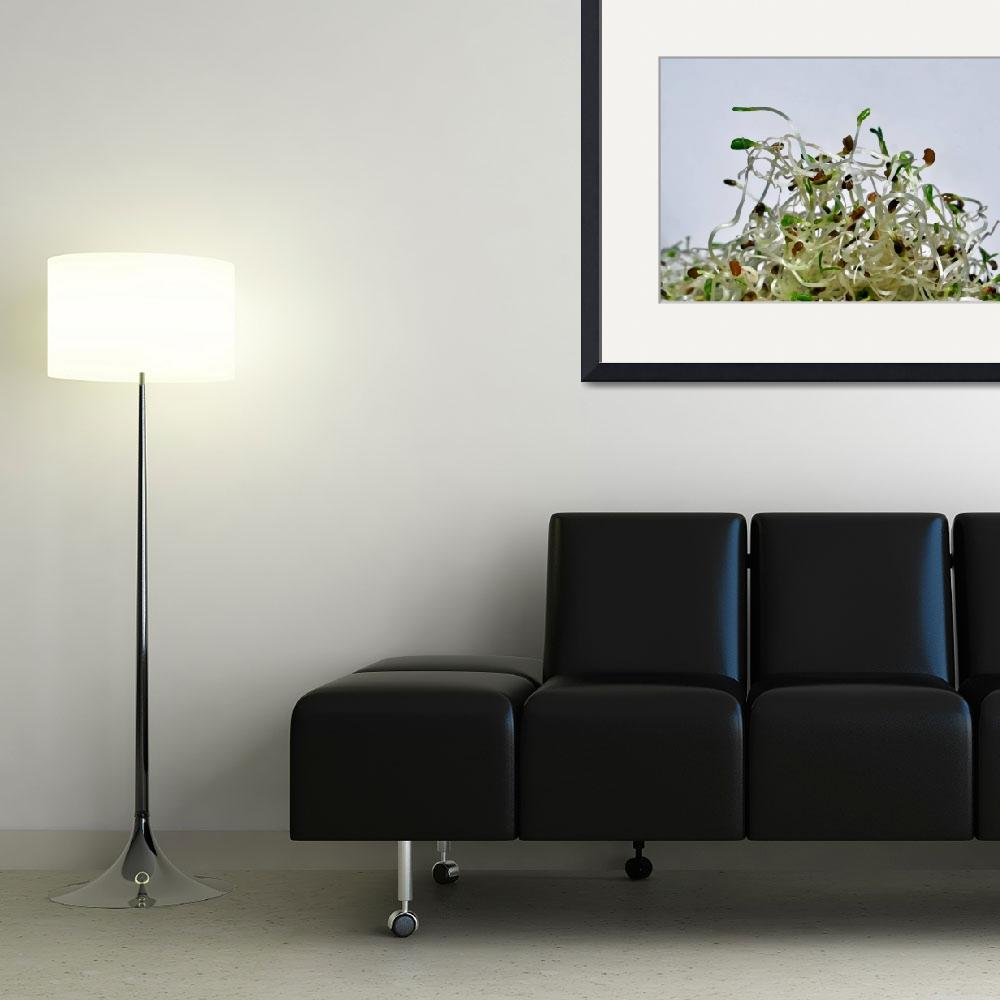 """""""Alfalfa Sprouts&quot  (2013) by LauraM"""