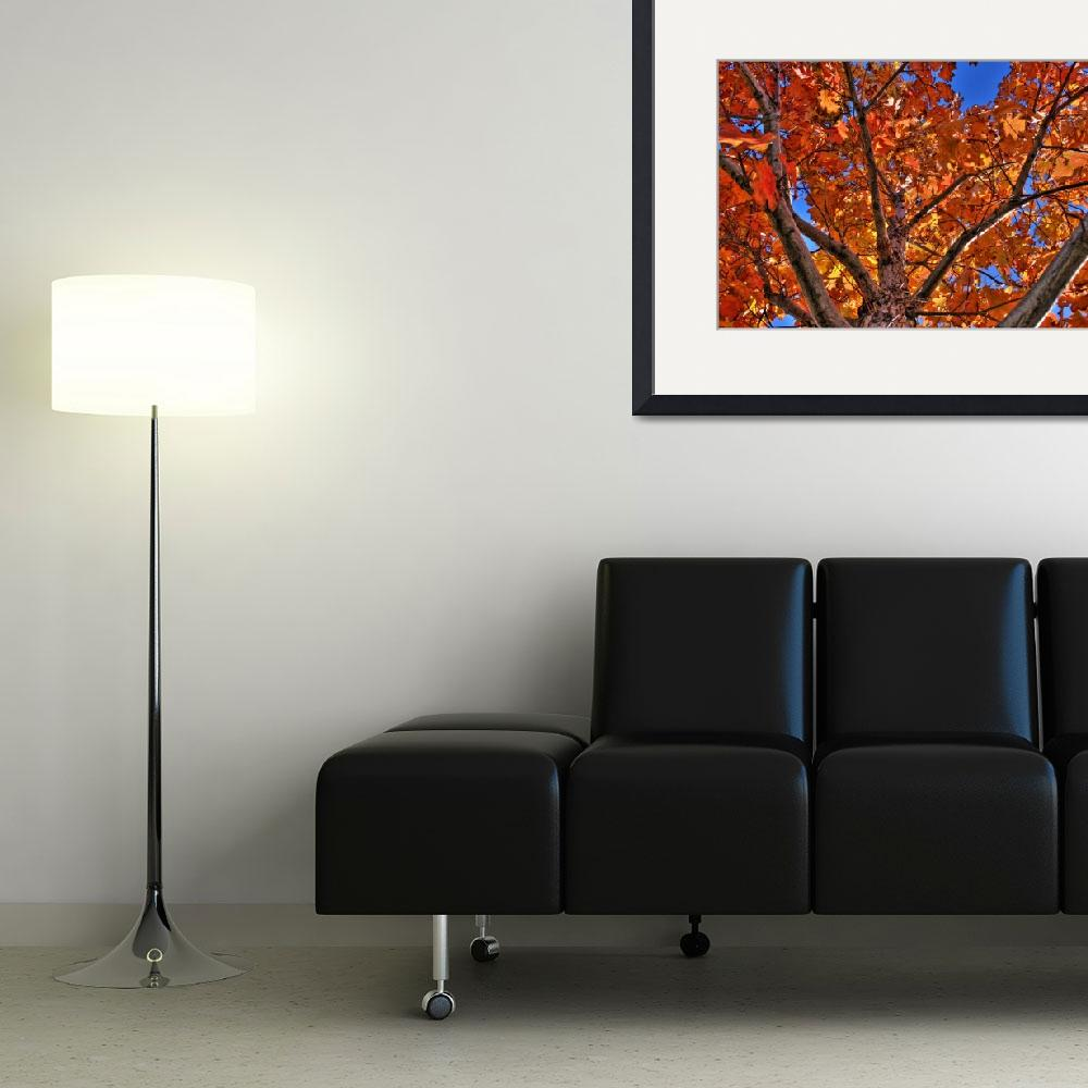 """""""Red Leaves / Blue Sky (HDR)&quot  by A2D"""