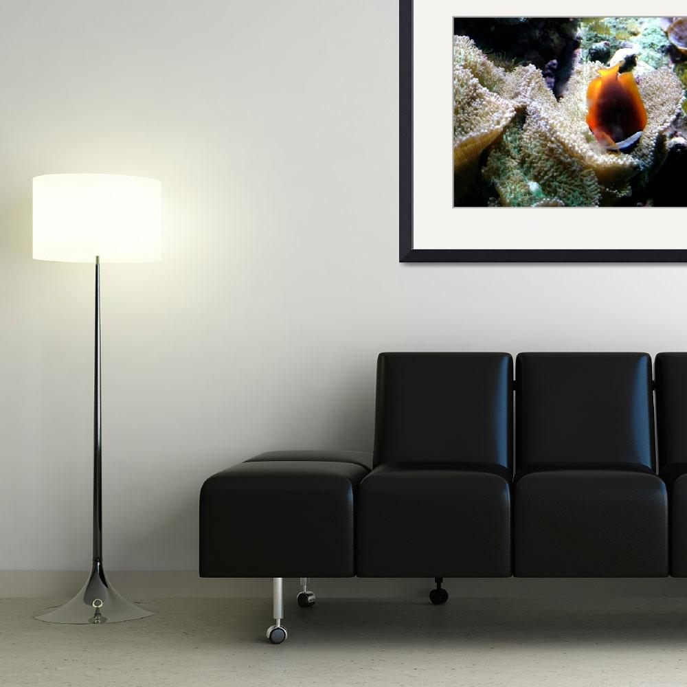 """""""Clown Fish in Bed of Coral""""  (2009) by paulyworksfineart"""