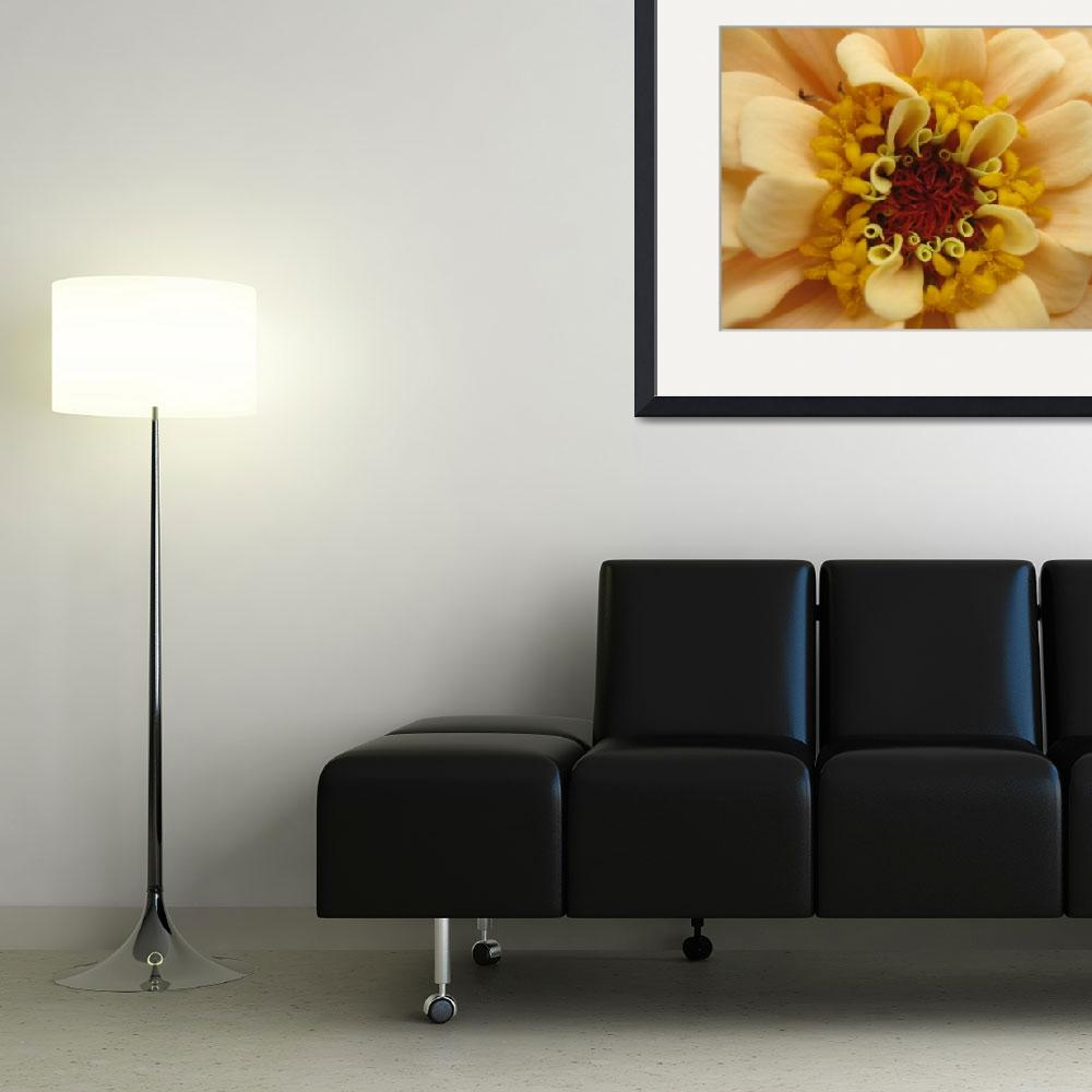 """""""Zinnia in Detail&quot  by Caz"""