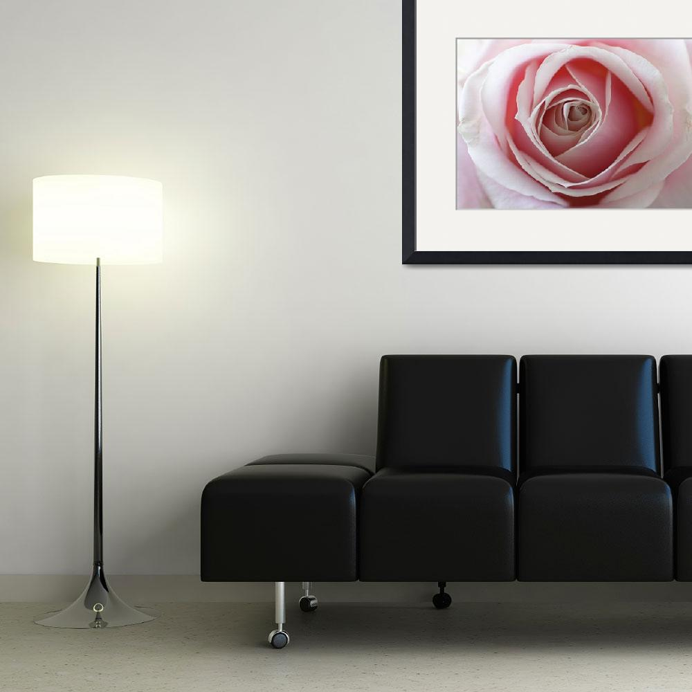 """""""TWO TONE ROSE""""  by ambientcrafts"""