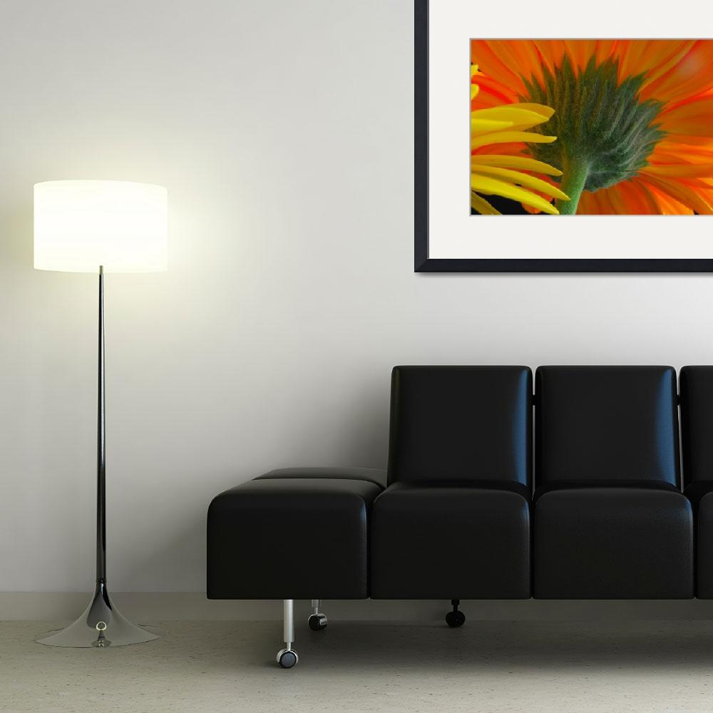 """""""Gerber Daisies&quot  (2008) by Rad"""