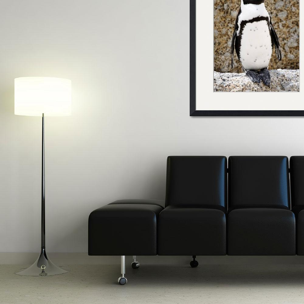 """""""African Penguin&quot  (2008) by dianesmook"""