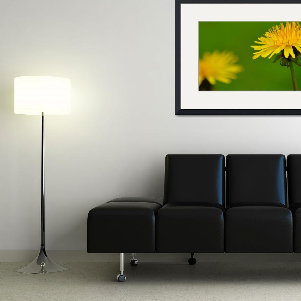 """Yellow Dandelion""  (2014) by joanhan"