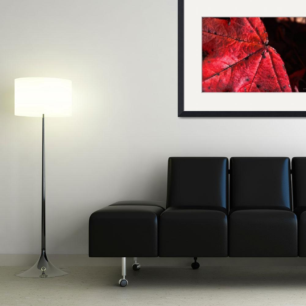 """""""Red Leaf&quot  (2010) by carylalys"""