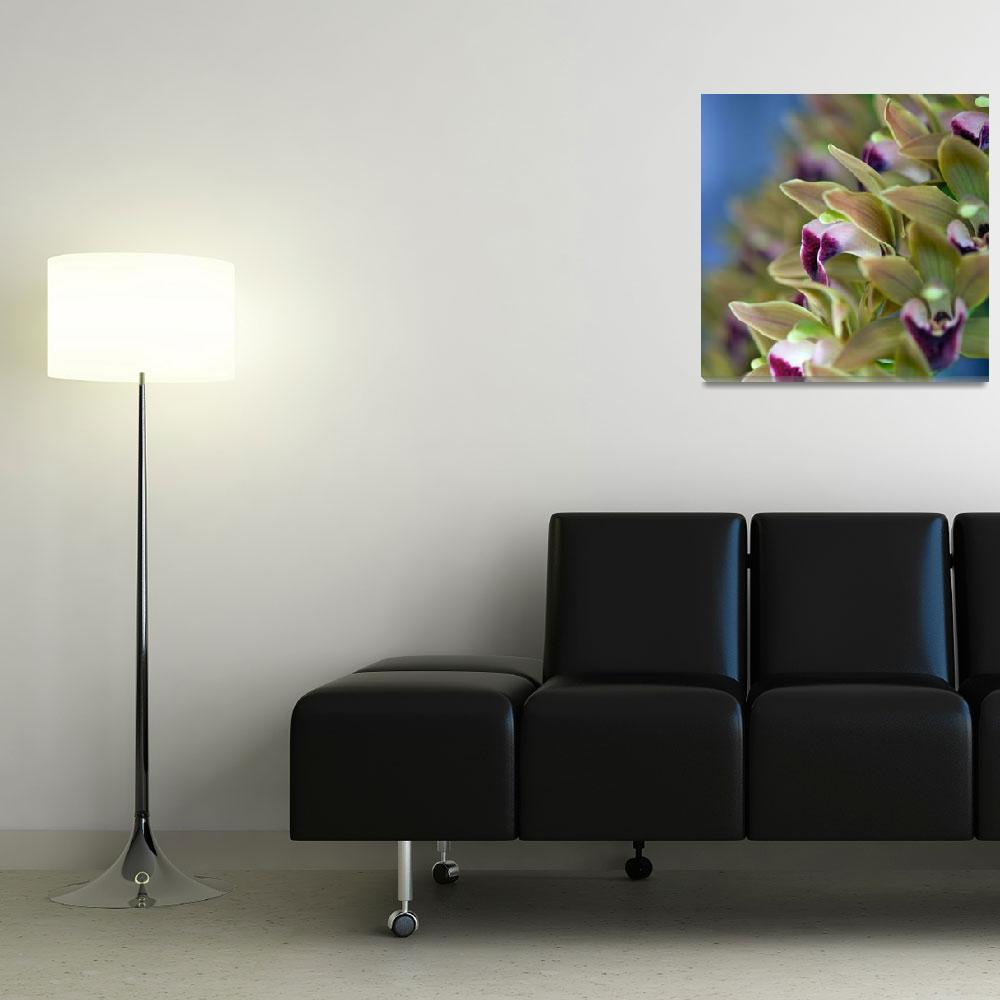 """""""Orchid bokeh""""  (2010) by ImageArt-Photography"""