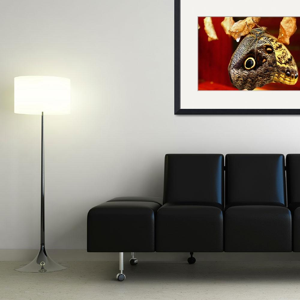 """""""Owl Eyes""""  (2012) by kcarter"""