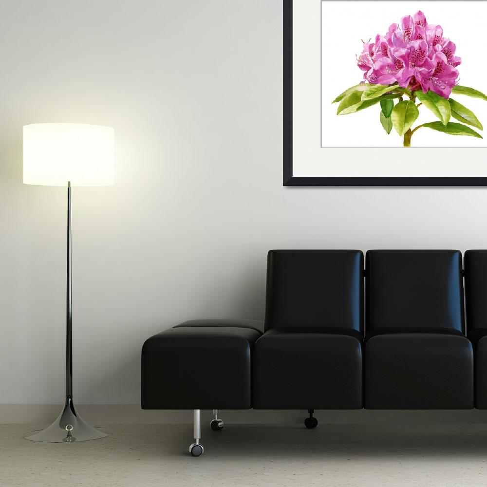 """""""Magenta Colored Rhododendron white background""""  (2014) by Pacific-NW-Watercolors"""