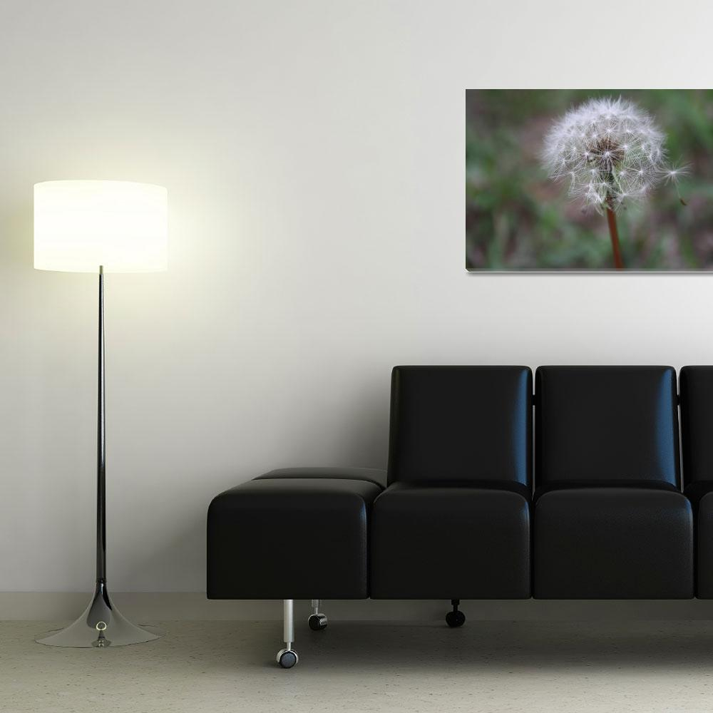 """Dandelion beauty""  (2008) by BehindTheLens"
