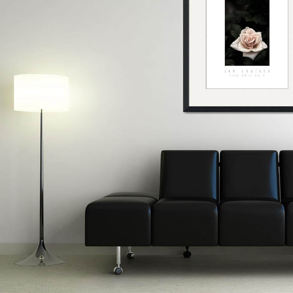 """""""PINK ROSE NO 3&quot  (2007) by JanKnutsen"""