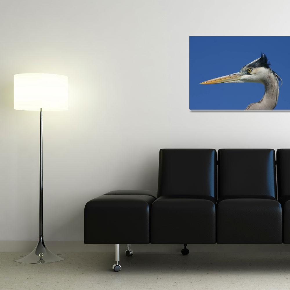 """""""Curious Heron""""  (2008) by NjordPhotography"""