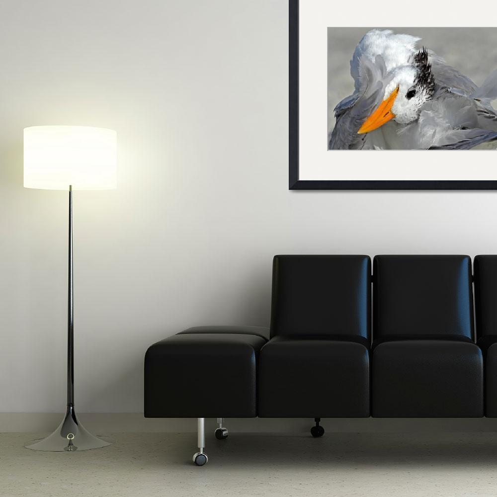 """Royal Tern (Sterna maxima)&quot  (2011) by shelshots"