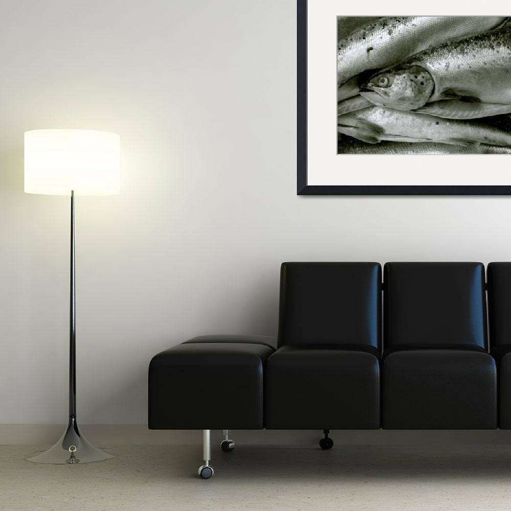"""""""Fish&quot  (2003) by RossPhotoWorks"""