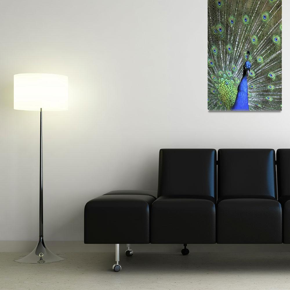 """""""Colorful Bouquet of Peacock Feathers""""  (2012) by WallArtDeco"""