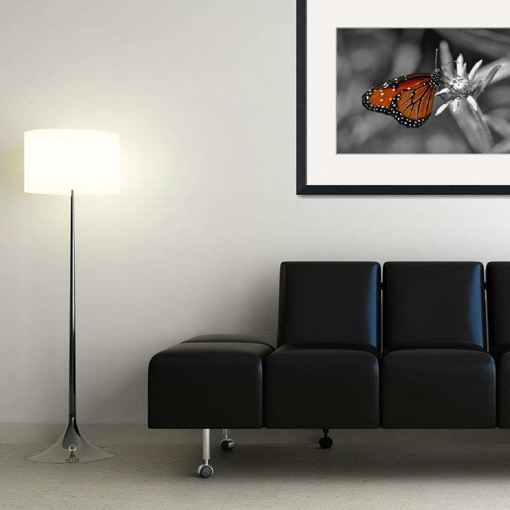 """""""Butterfly in a Black and White World""""  (2010) by kristinmarie"""