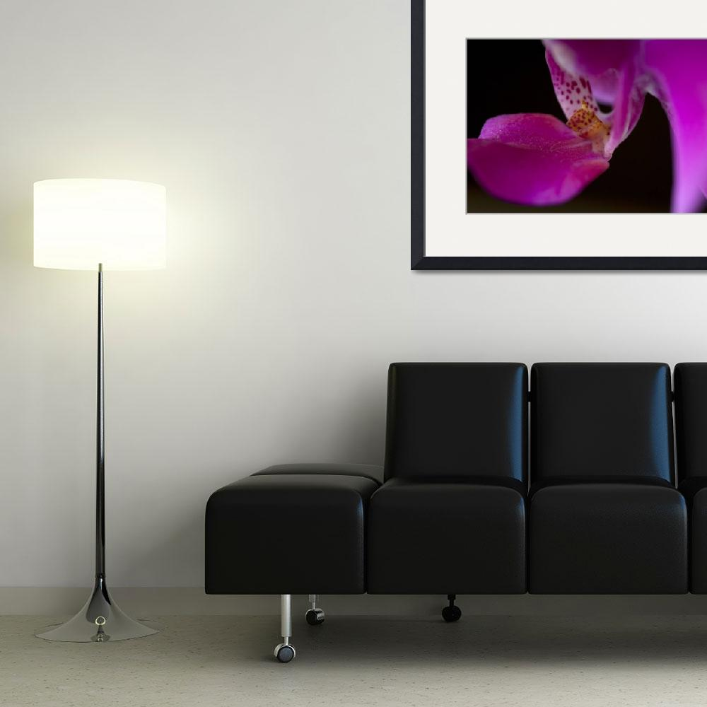 """""""Purple Orchid&quot  (2006) by DavidPage"""