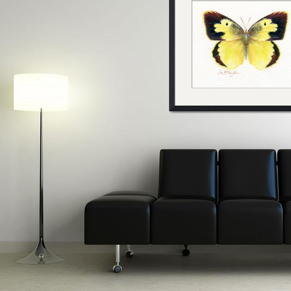 """""""Dogface butterfly&quot  (2008) by LisaMclaughlin"""