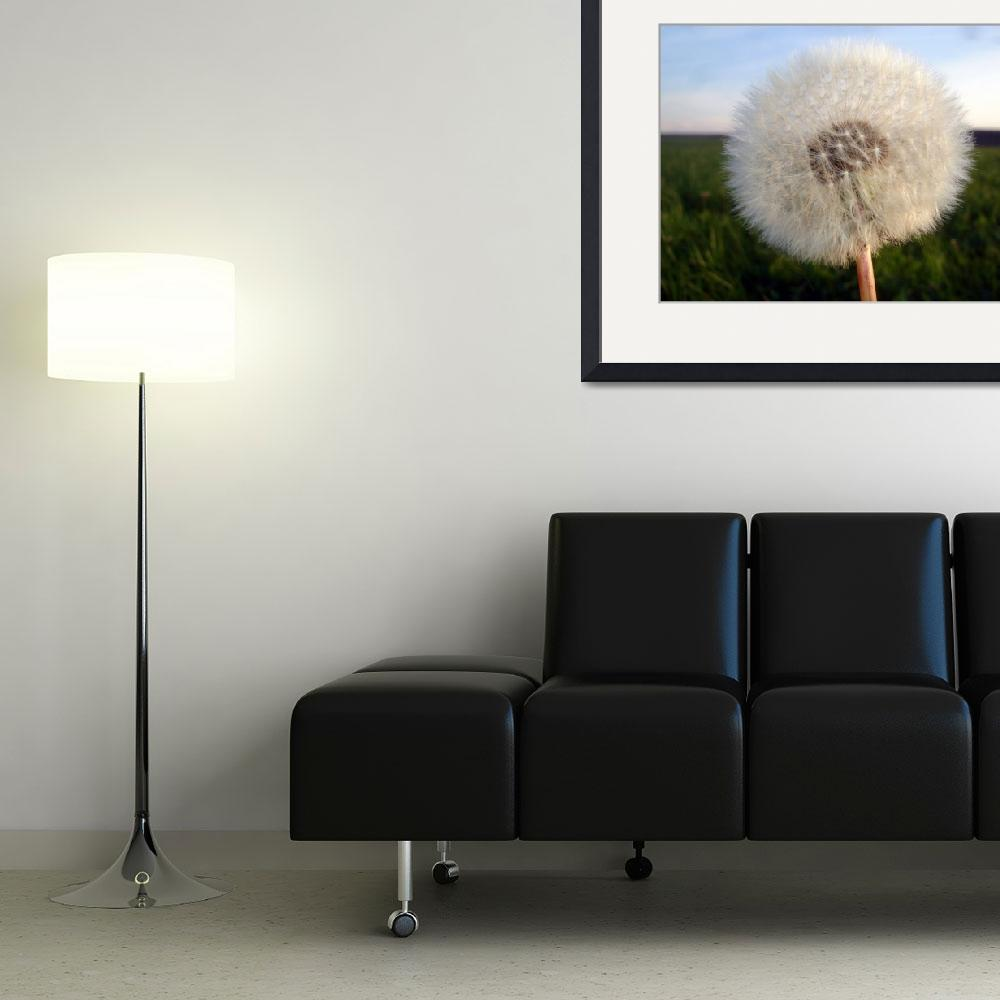 """Deutsch Dandelion""  by Artsart"
