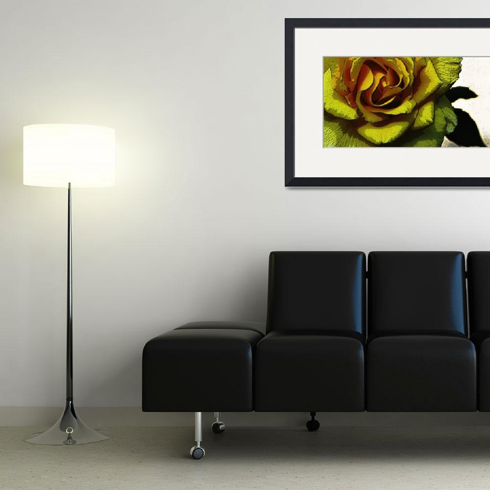 """""""Yellow Rose&quot  (2006) by Dubhthaigh"""