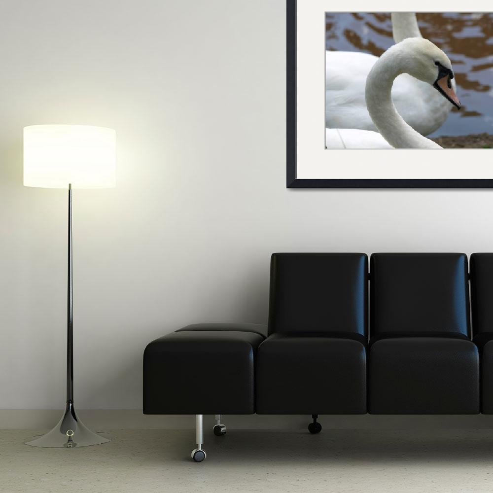 """""""Swan face 2&quot  (2009) by Albertphoto"""