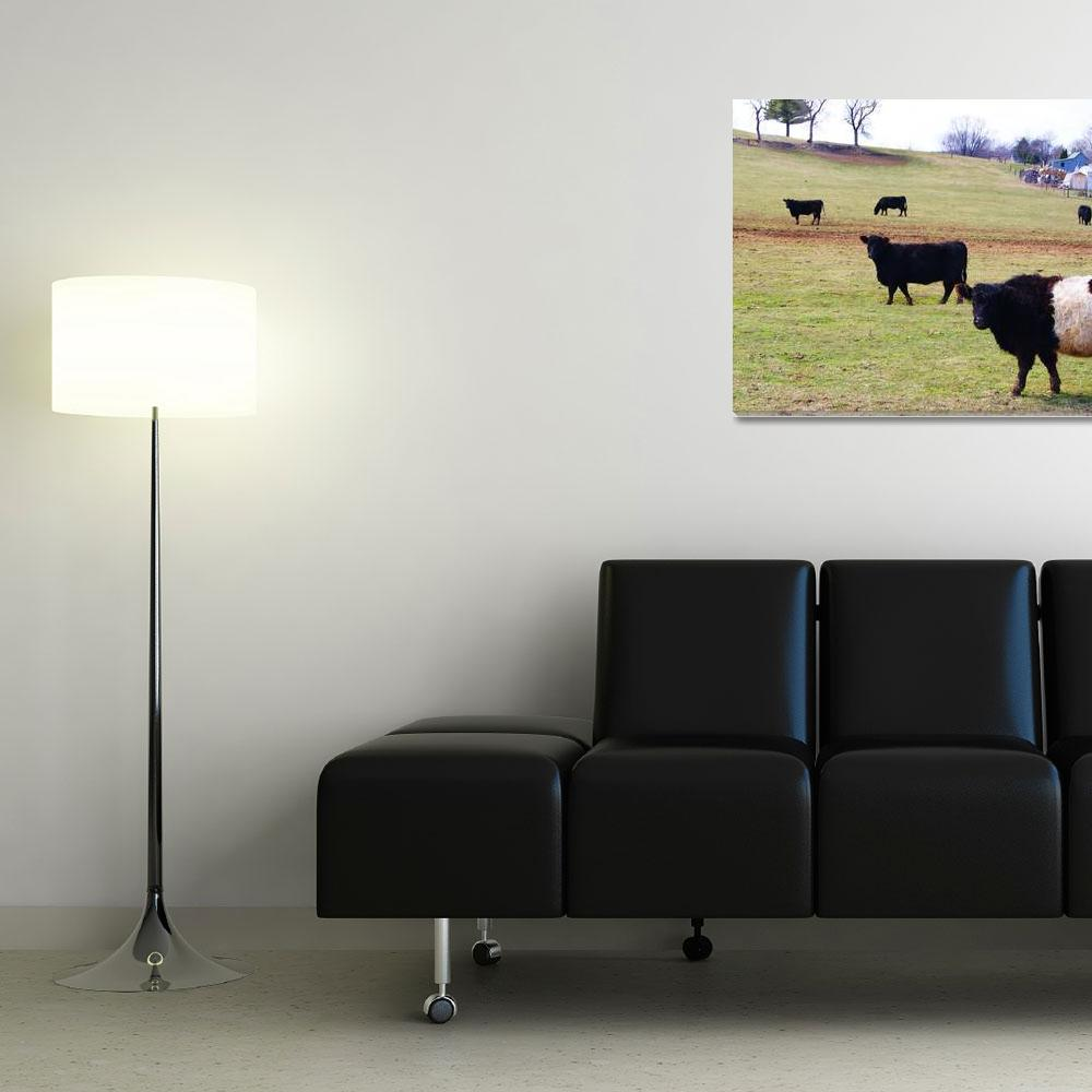 """Cows Graze&quot  (2011) by shsight"