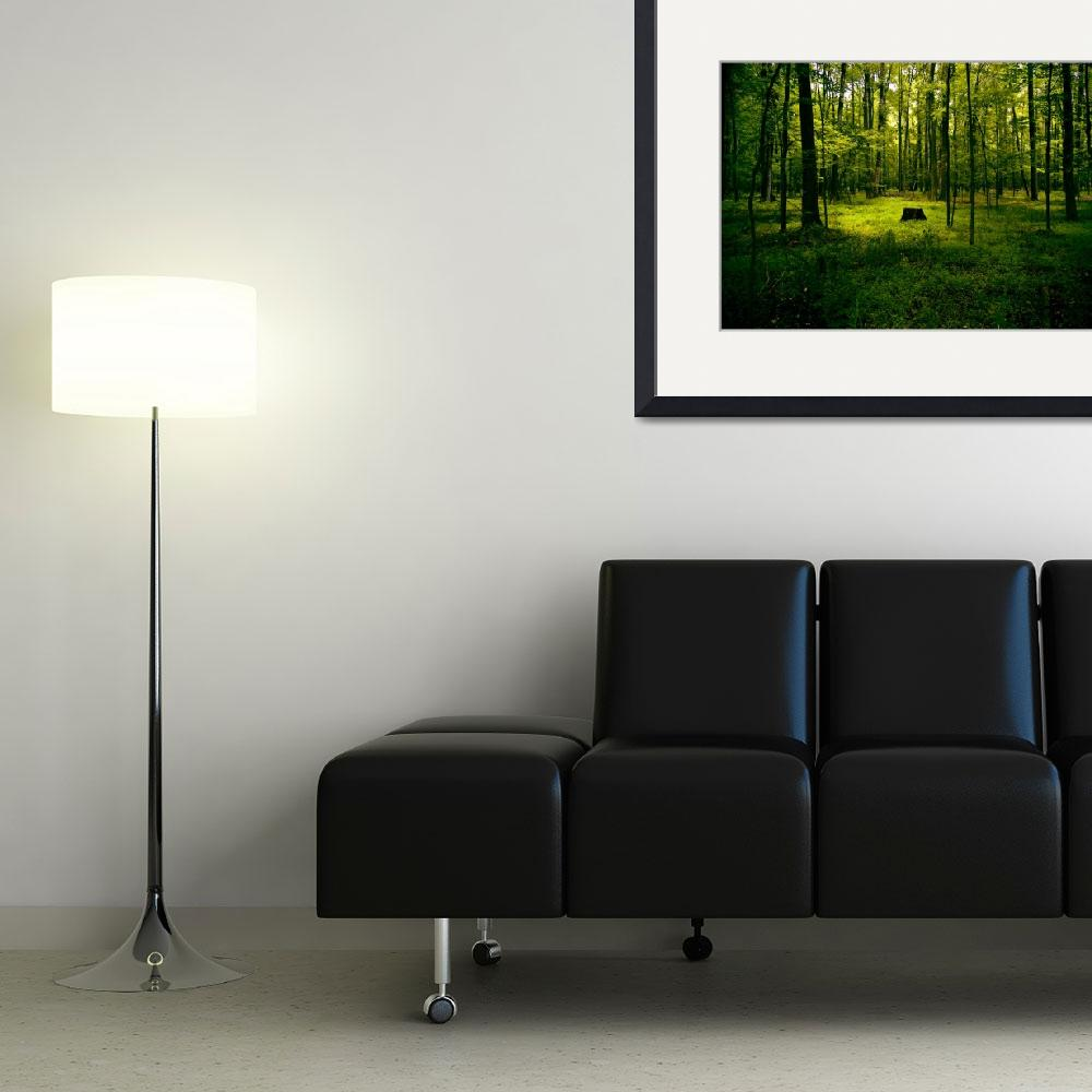 """""""The Forest&quot  (2007) by hencio"""