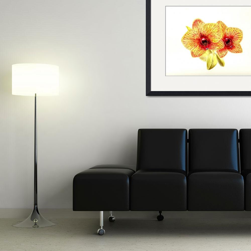 """""""Phalaenopsis Orchid&quot  (2003) by vigliotti"""