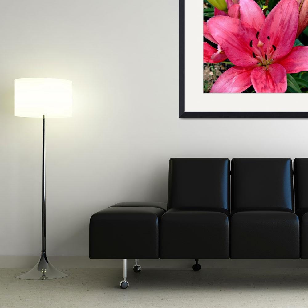 """""""Red Day Lily&quot  (2016) by bavosiphotoart"""