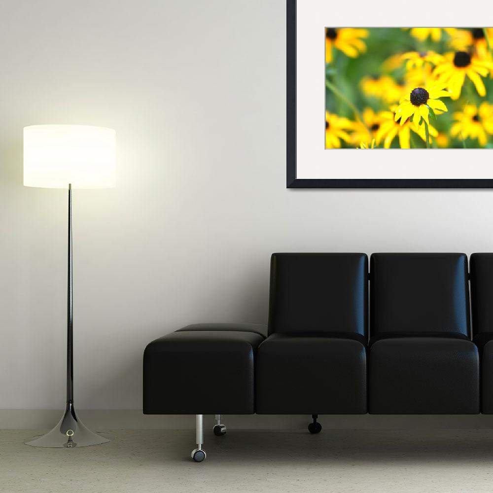 """""""Profusion of Black Eyed Susans""""  (2008) by nadinerippelmeyer"""