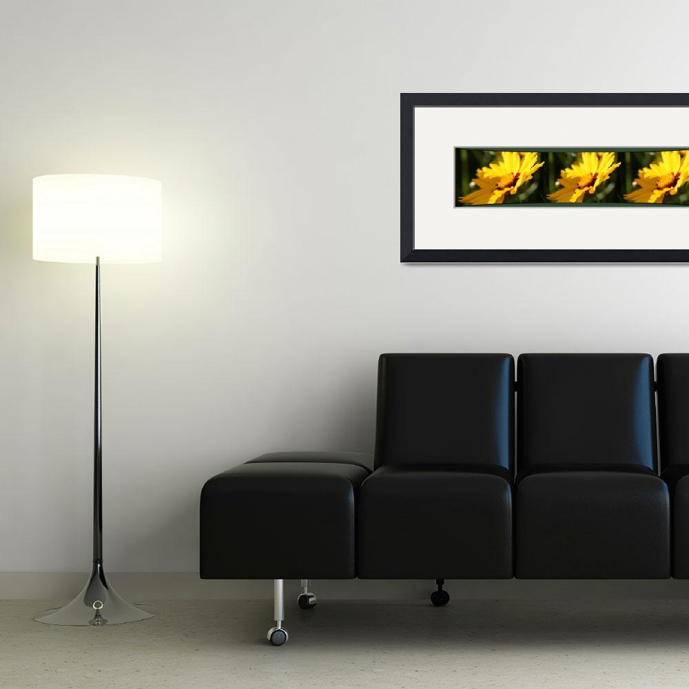 """""""Three Coreopsis Flowers Right""""  (2011) by byStangz"""