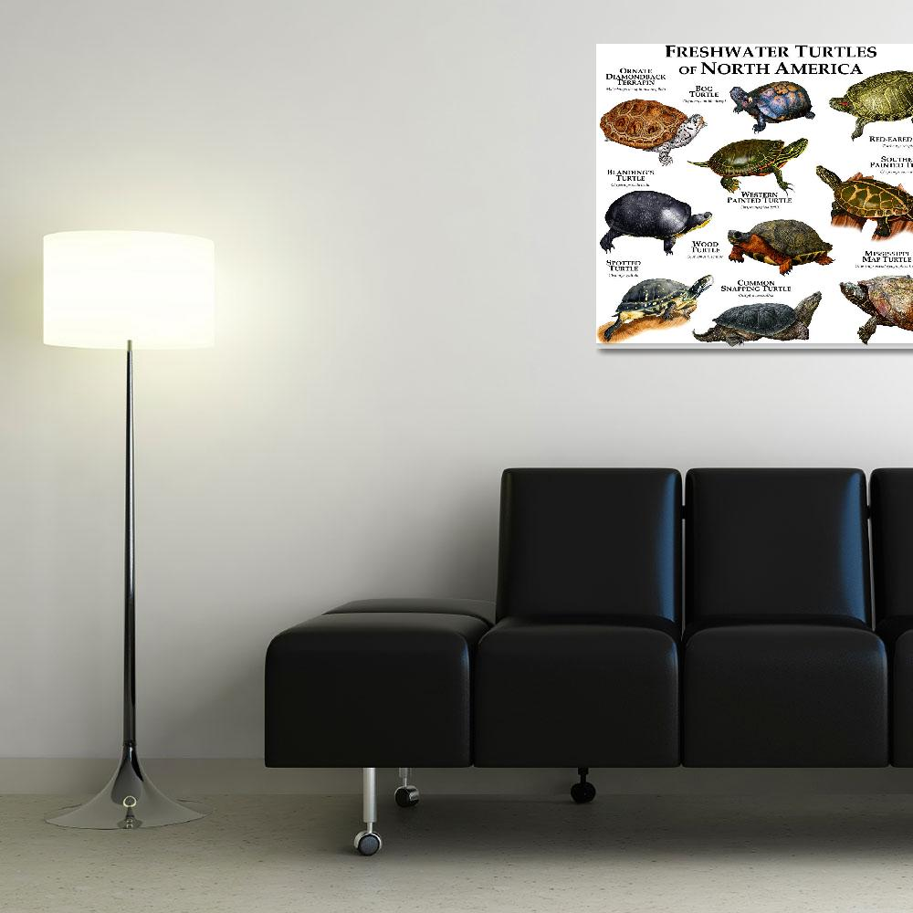 """Freshwater Turtles of North America""  (2013) by inkart"