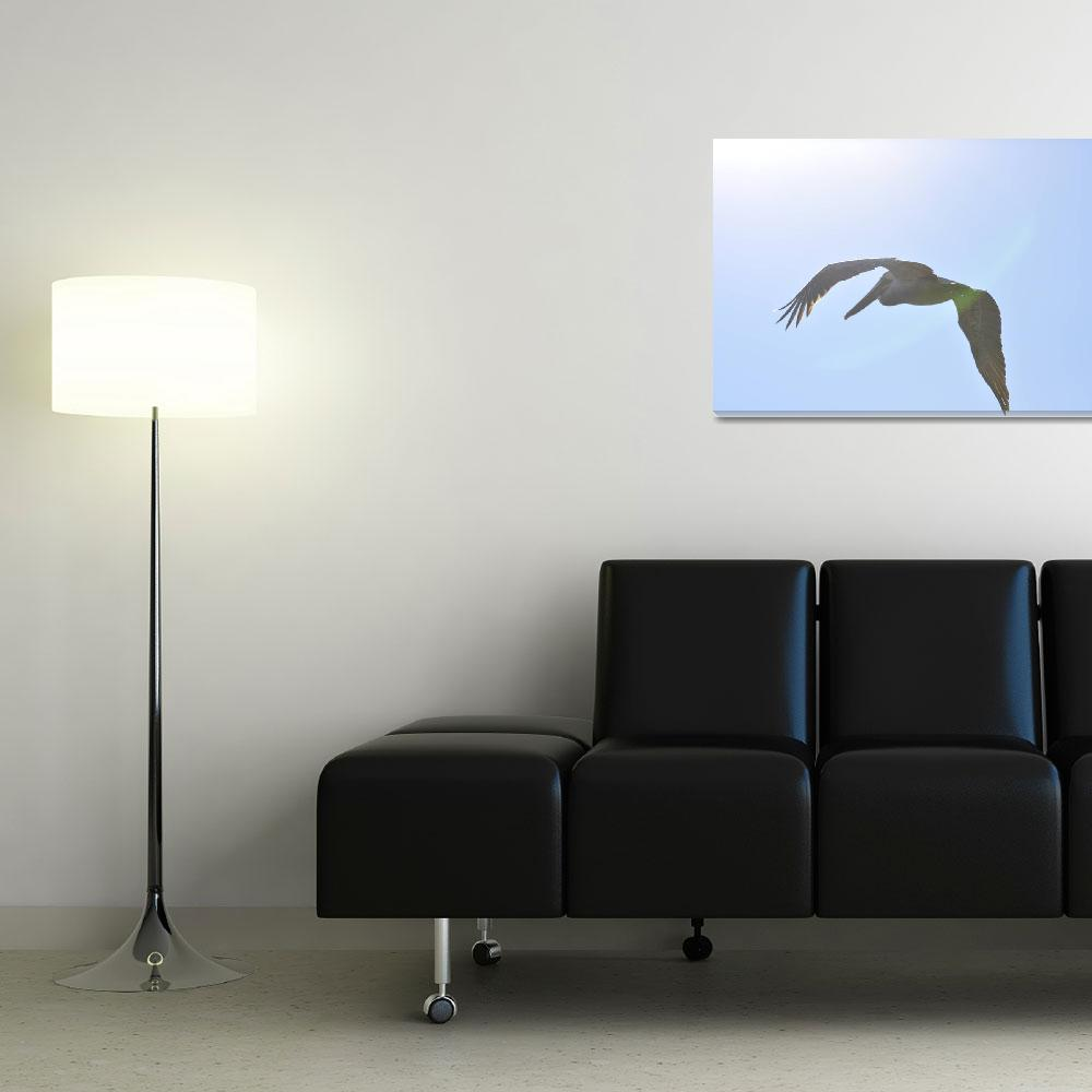 """""""pelican in the sun""""  (2010) by chuckie"""