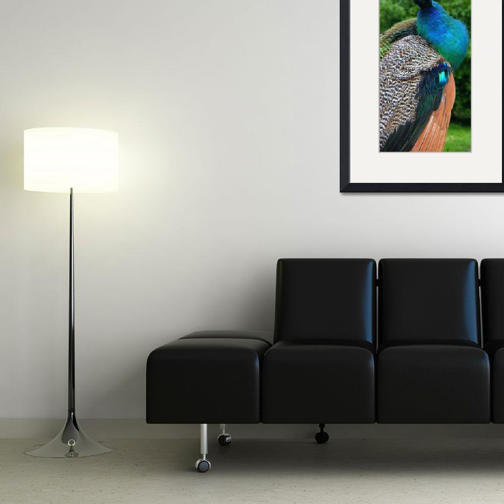 """""""19 Peacock 1&quot  (2008) by willifindunow"""