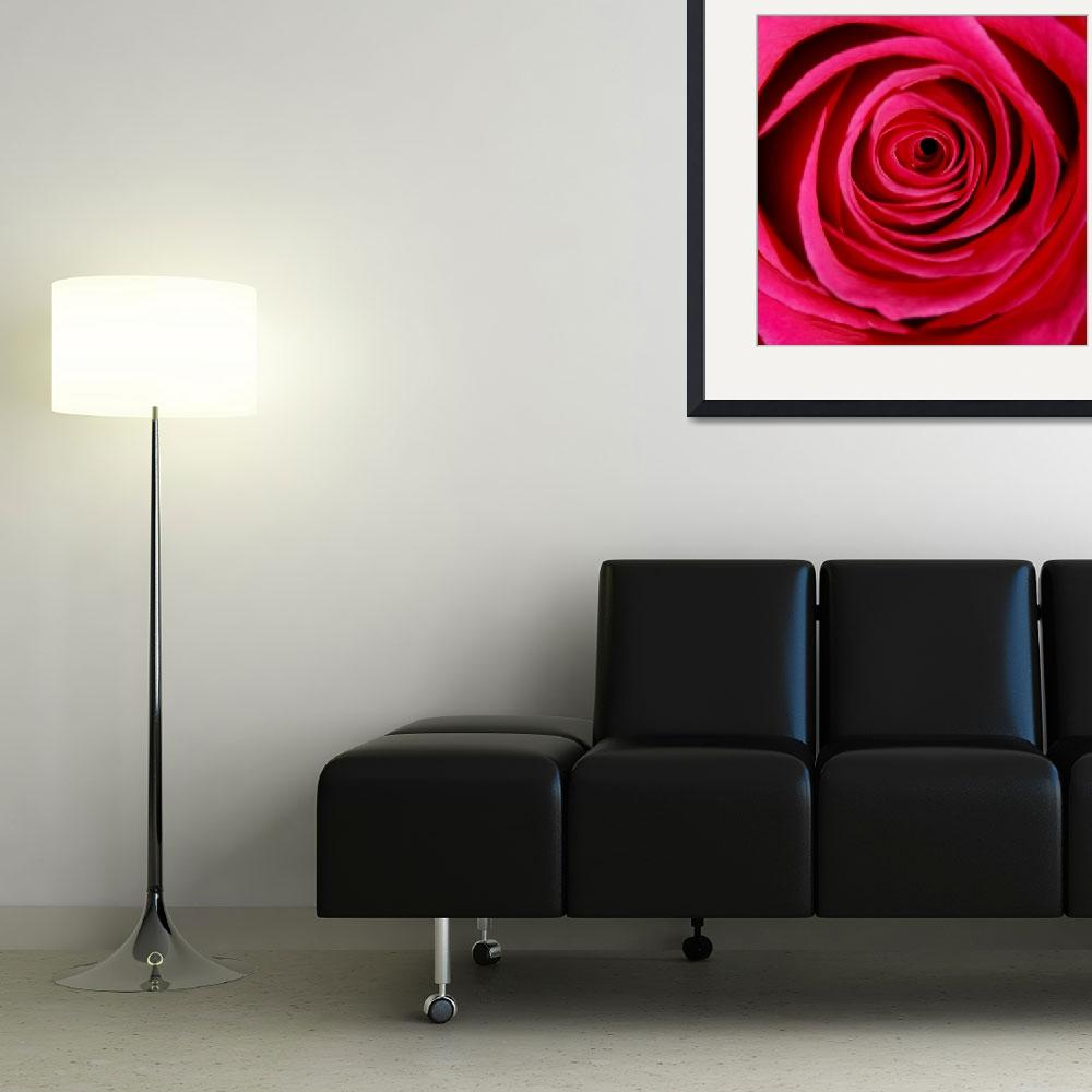 """Rose 7 10x10&quot  by snaphappy"