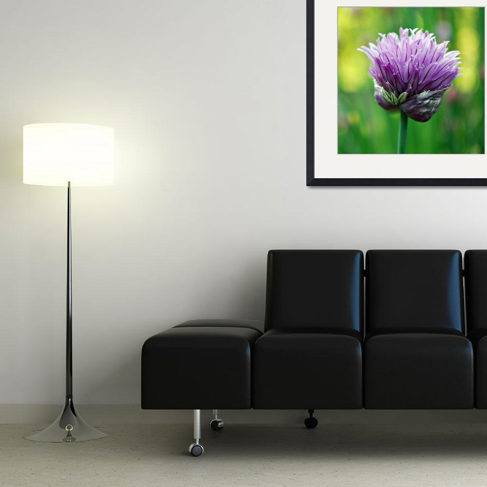 """""""Chive Blossom&quot  (2009) by KjWorthing"""