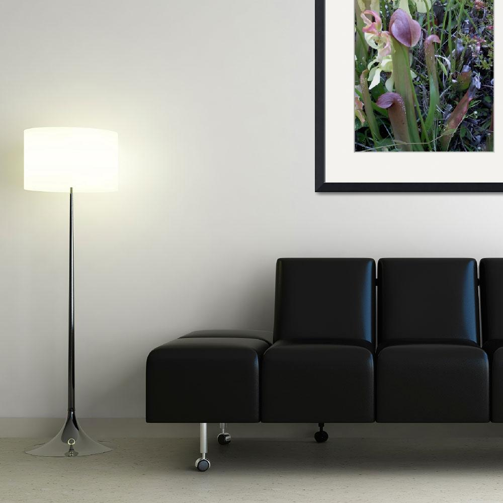"""""""Pitcher Plants I&quot  (2007) by rderder"""