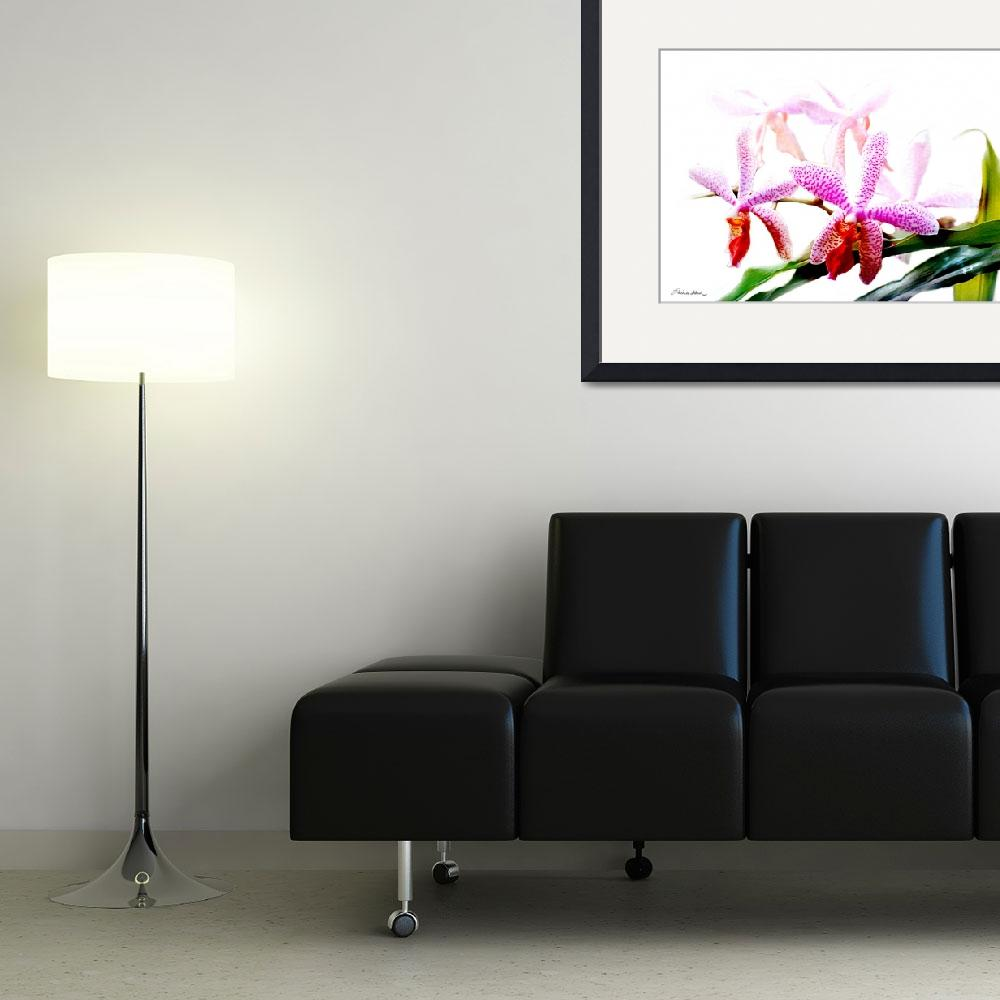 """Orchid No. 4 - Phalaenopsis""  (2006) by MBush1us"